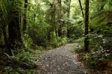 Walking trail in forest