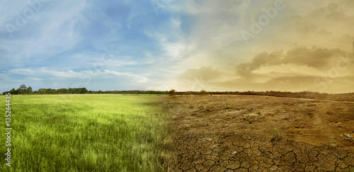 Foto op Canvas Natuur Landscape of meadow field with the changing environment