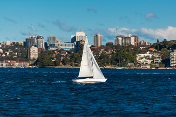 Boat with white sail, yacht on Sydney Harbour