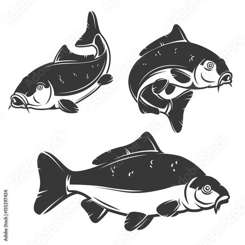 Fototapeta Set of carp fish icons isolated on white background.