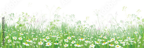 Vector  blossoming flowers  field, nature border isolated. - 135315218
