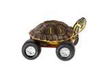 Turtle on wheels - 135322655