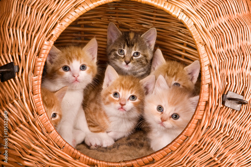 Six in a basket Poster
