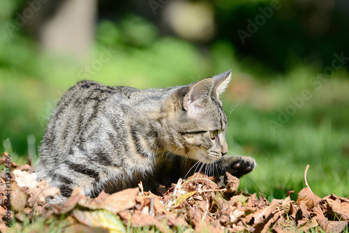Poster Kitten lying on the meadow in the leaves