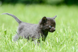 black kitten standing on meadow