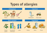 Types of allergies. Scheme. Color