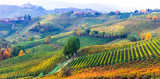 amazing vast plantation of vineyards in Piemonte- famous vine region of Italy