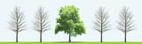 Healty tree between dead trees