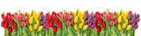 Fresh spring tulip flowers water drops Floral banner