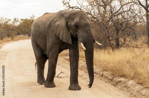 Poster Kruger National Park