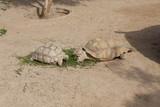 Turtles Sunning photo - 135412294