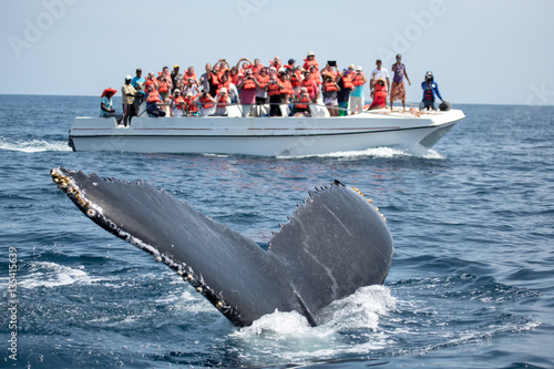 Poster Humpback whale tail in Samana, Dominican republic and torist wha