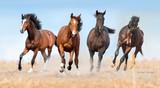 Stado koni galop z kurzem