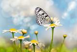 Schmetterling auf einer Wiese mit Margeriten