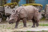 Photo of Rhino baby