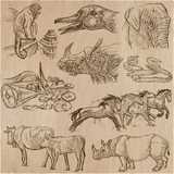 animals - an hand drawn vector pack, collection. - 135502294