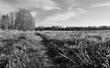 paysage noir et blanc nature froid - 135502499