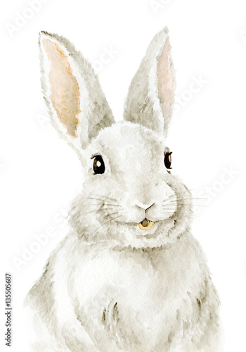 Easter Bunny. Farm animals. Watercolor drawing. Cute Illustration - 135505687