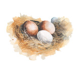 Fototapety Eggs in the nest watercolor painting illustration isolated on white background