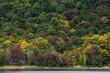 Green canadian autumn