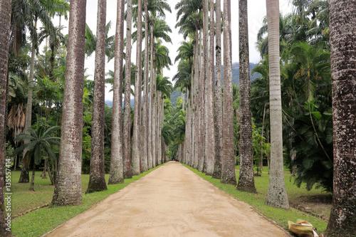 Papiers peints Rio de Janeiro Botanical garden of Rio de Janeiro. Beautiful road surrounded by palm trees. Brazil