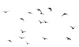 flock of pigeons on a white background - 135563898