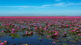 Lake of Red waterlily at Udonthani Province , Thailand