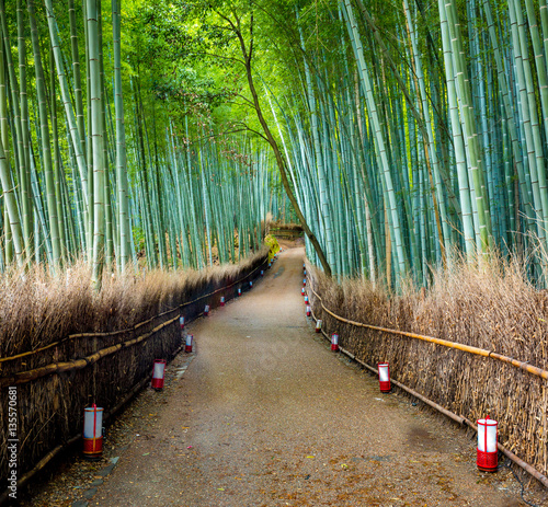 Foto op Plexiglas Japan Path to bamboo forest, Arashiyama, Kyoto, Japan.