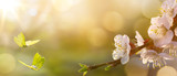 Spring flower background; Easter landscape - 135614221
