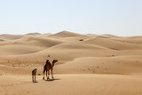 Camel family in the desert