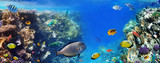 Colorful coral reef fishes of the Red Sea. - 135668638