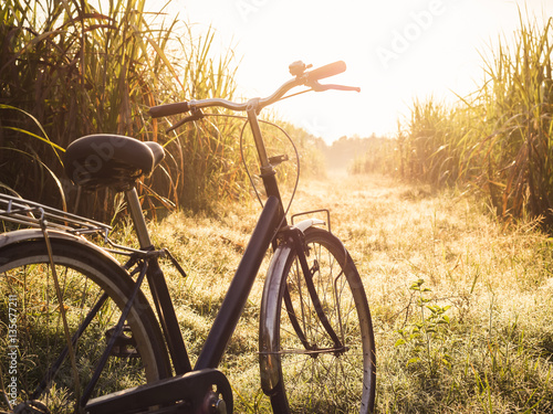 Tuinposter Fiets Bicycle ride outdoor Summer meadows field sunrise Vintage tone