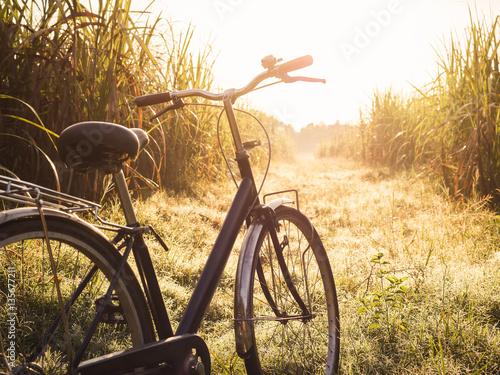 Foto op Canvas Fiets Bicycle ride outdoor Summer meadows field sunrise Vintage tone