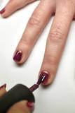 Manicure nail paint purple color.