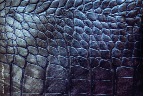 Reptile leather texture Poster