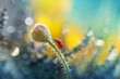 Walk up the stem of a poppy