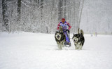 Husky race outdoors in winter.