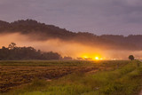 Harvested rice field view with sunrise background