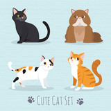 Cute Cats Breed