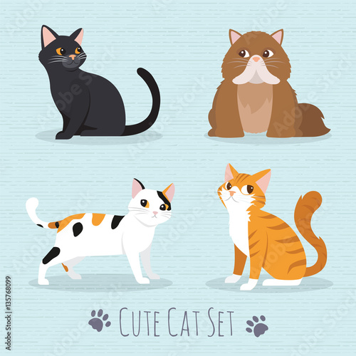 Fototapeta Cute Cats Breed
