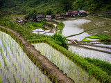 Visiting the rice terraces in Hapao near Banaue