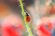 A small ladybug climbs the beanstalk to the top