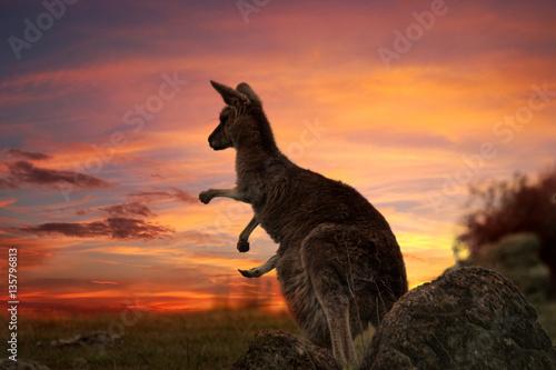 Fotobehang Kangoeroe Sunset Kangaroo Australia