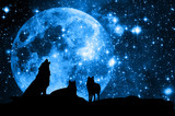 Wolves and Moon like a concept for magic wolf pack  - 135798203