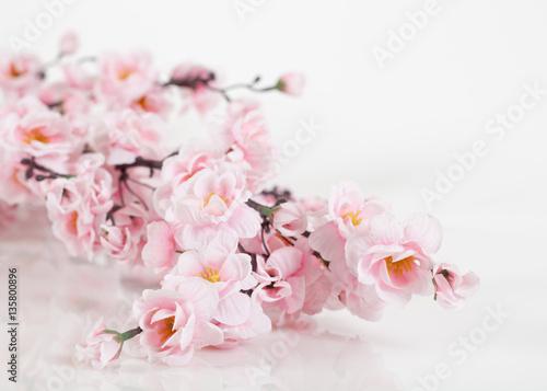 Poster Sakura on a white background
