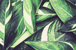 Wet Fresh tropical Green leaves background , vintage color tone