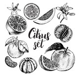 Hand drawn set of different kinds of citrus fruits. Food elements collection for design, Vector illustration. - 135818083