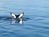 Cola de ballena emergiendo del mar