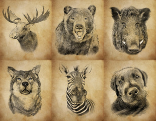 Set on animals on vintage background. Illustration in draw, sket