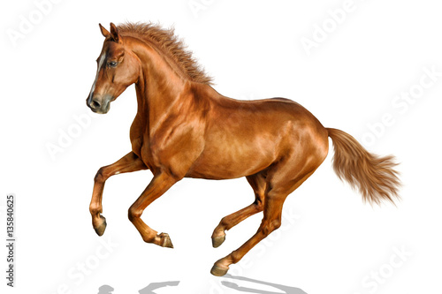 Chestnut horse is freely cantering.